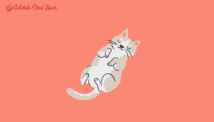 cara merawat kucing agar cepat sembuh